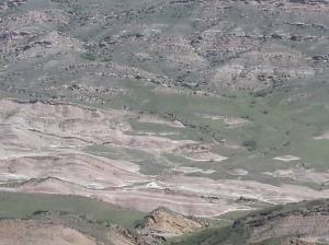 Geopluta