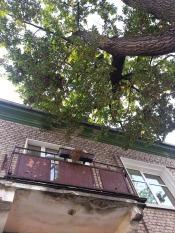 Močiutės balkonas ir ąžuolas - kaip iš anksčiau.